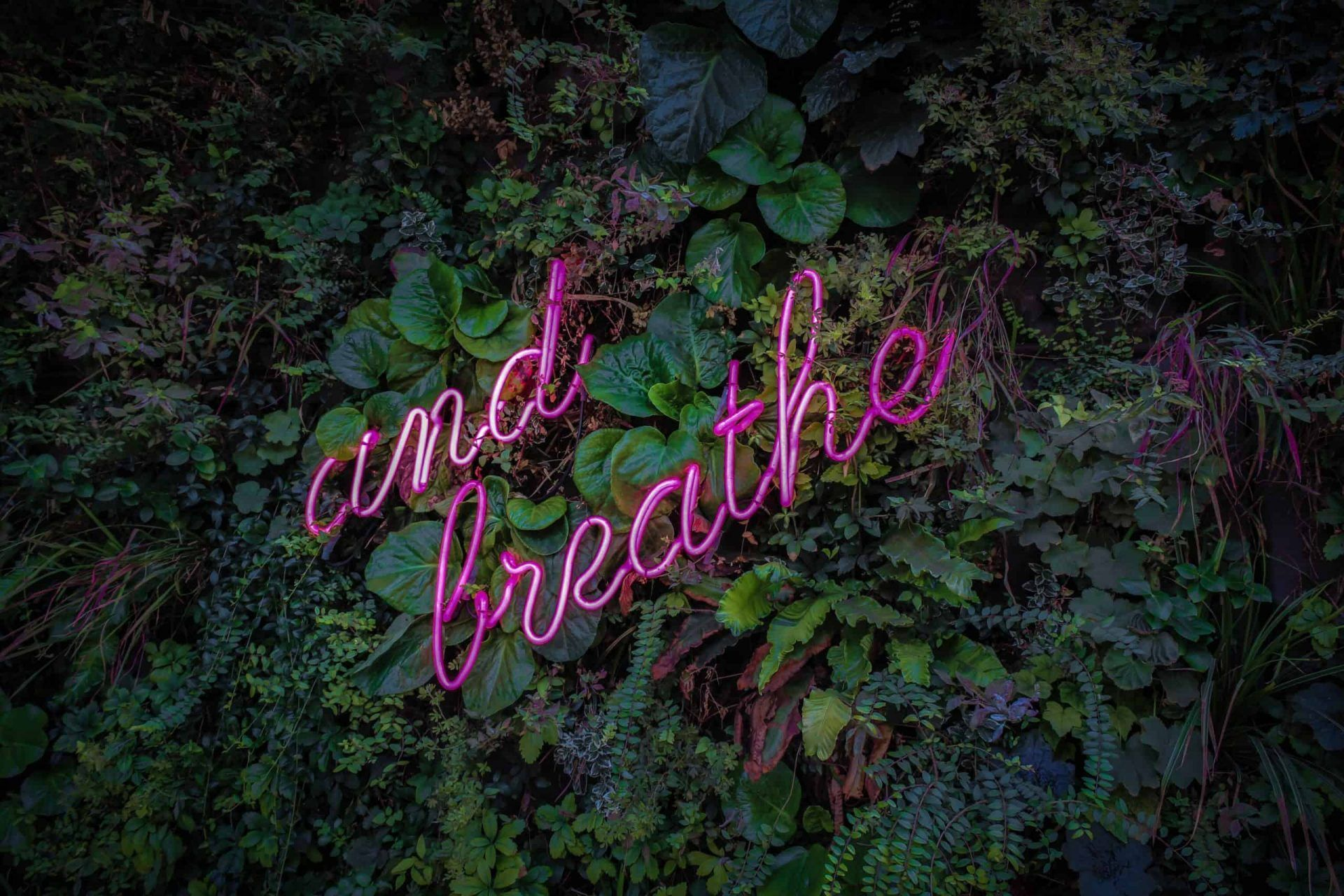 "image of a pink neon sign with words: ""and breathe"" against a garden background"